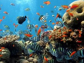 Tutte Le Offerte per il Mar Rosso