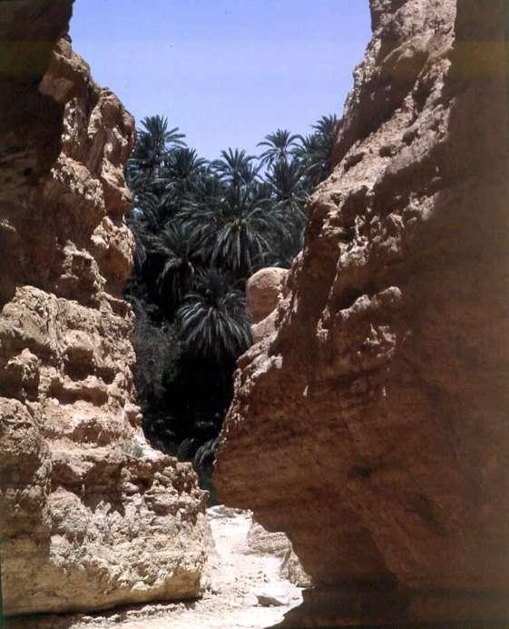 TOUR DELLE OASI DA MONASTIR 4/5*, HOTEL EL MOURADI CAP MAHDIA | Tour della Tunisia